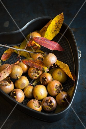 Fresh medlars with a sprig of leaves in a heart-shaped baking tin