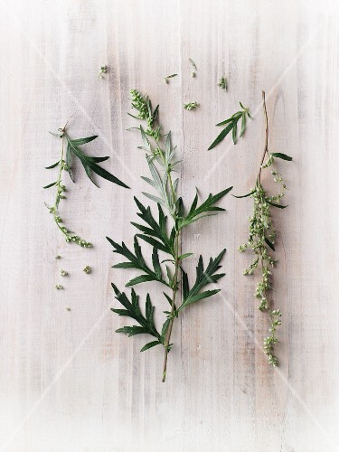 Fresh mugwort with flowers