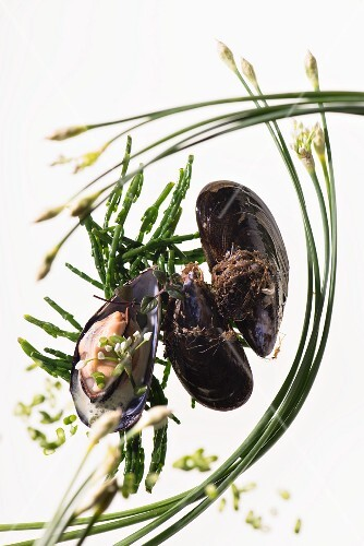 Mussels and chives