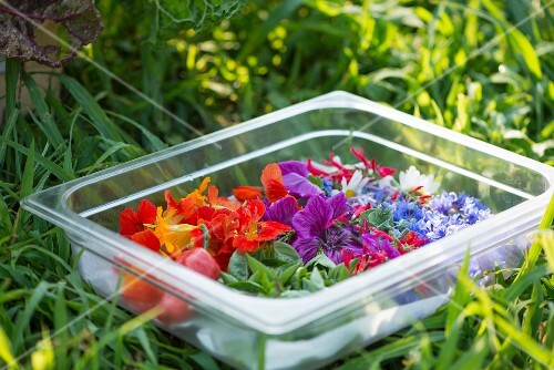 Various edible flowers in a plastic container