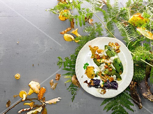 Red cabbage and savoy cabbage roulade with chanterelle mushrooms