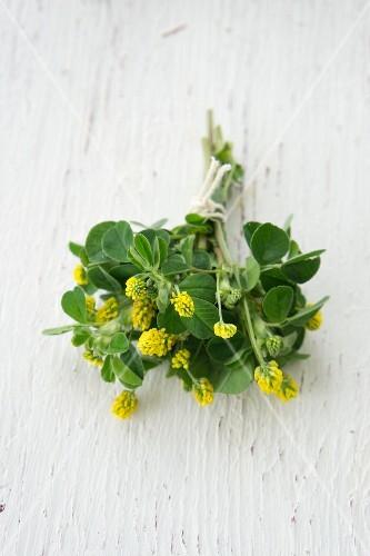 A bunch of hops clover