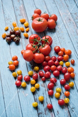 Various tomatoes on a blue wooden table