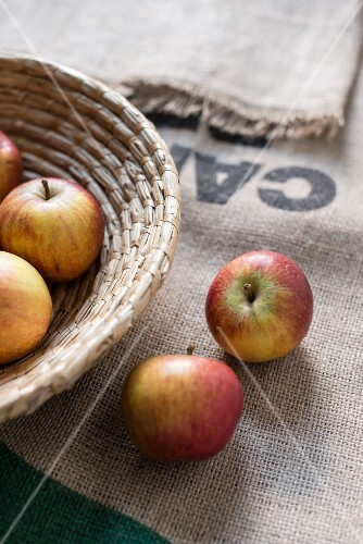 An arrangement of apples with a basket and a jute sack