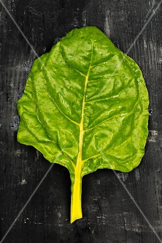 A leaf of White Silver chard on a dark surface