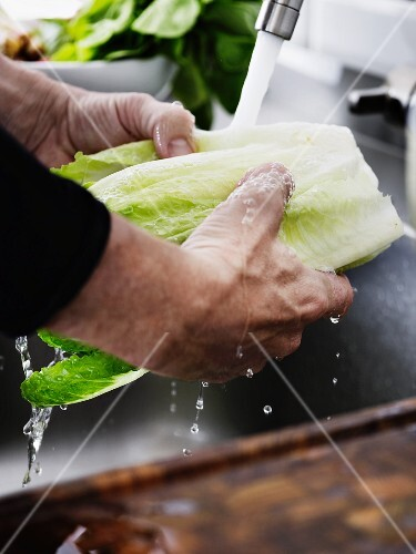 A man washing cos lettuce under running water in a kitchen sink
