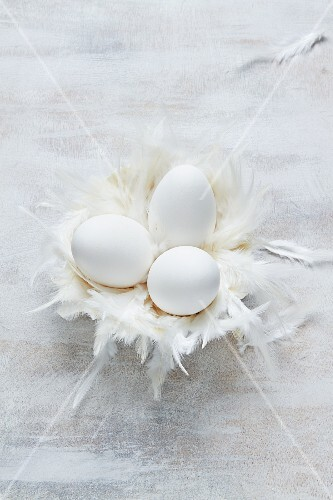 Goose eggs in a feather nest