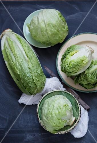 Various types on lettuce
