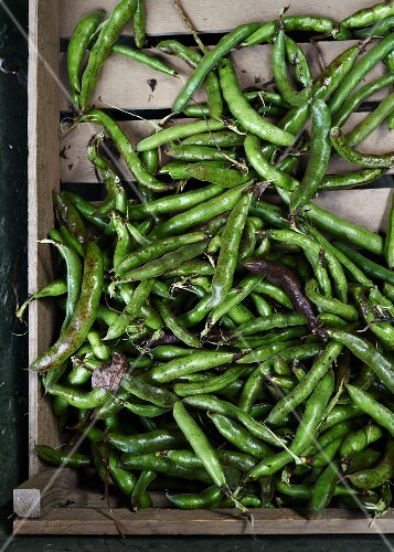 Broad beans in a crate
