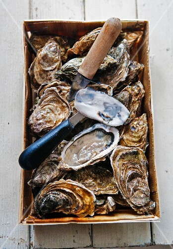 Fresh oysters (Marennes D'Oleron) with a knife in a basket