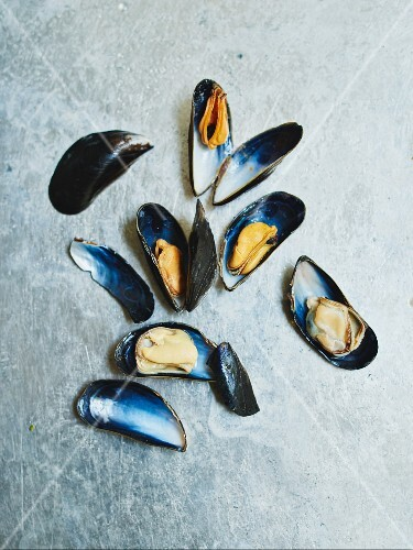 Mussels on a grey surface