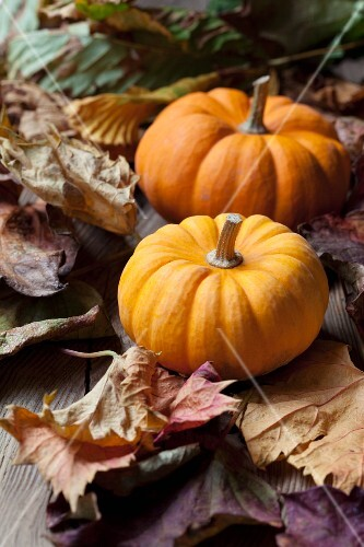 Two organic mini pumpkins on autumnal leaves