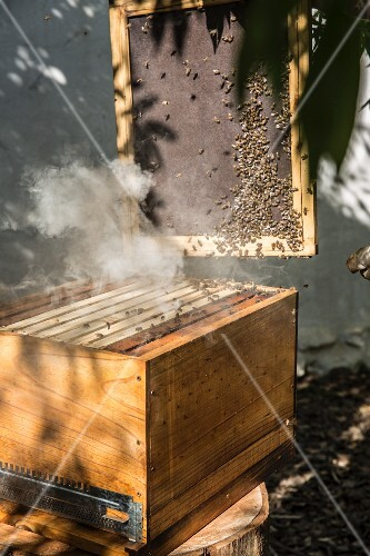 Bees around a beehive