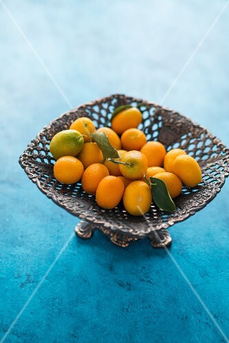 Kumquat with leaves in a metal bowl