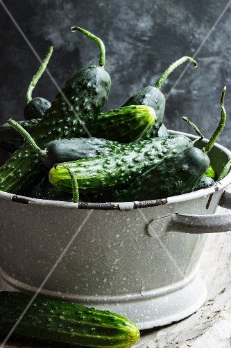 Freshly washed country cucumbers in a colander