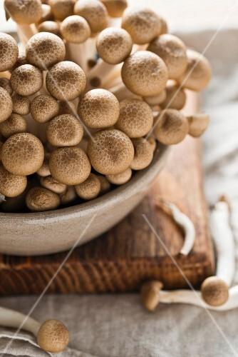 Fresh shimeji mushrooms in a ceramic bowl on a chopping board (close-up)