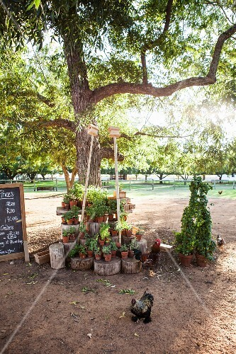 Free-range hens and potted plants on collection of tree stumps under tree