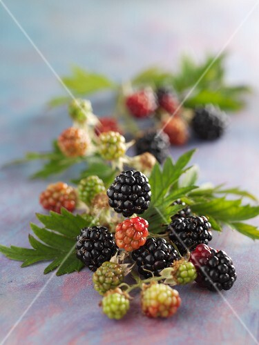 Blackberries