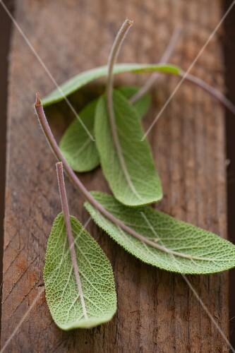 Fresh sage leaves (close-up)
