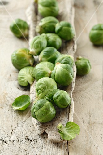 Fresh Brussels Sprouts on Stalk