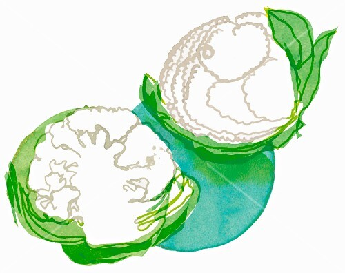 Two cauliflowers (illustration)