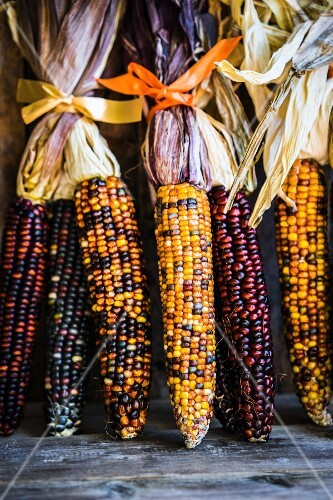 Multicoloured corn cobs on rustic wooden surface