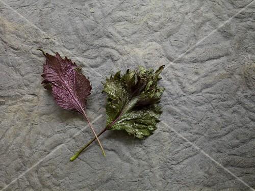 Two fresh shiso leaves