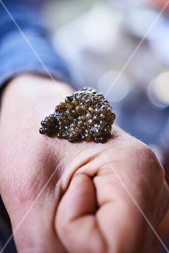 Caviar on a fist