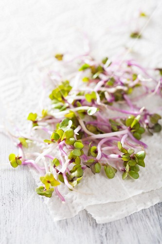 China rose sprouts on a piece of paper