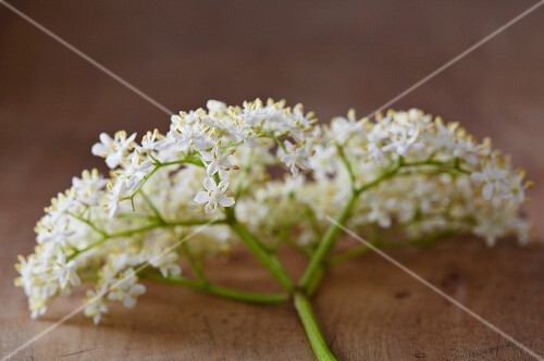 A sprig of elderflowers on a wooden surface