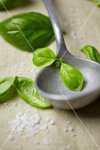 Basil leaves and a ladle
