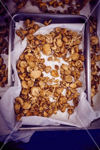 Dried mushrooms on a baking tray