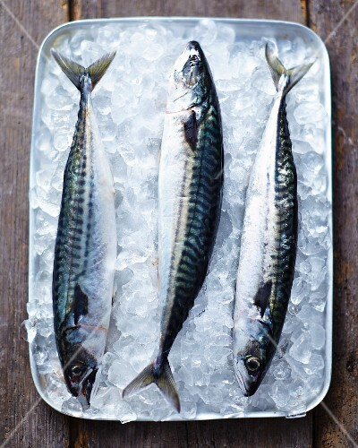 Fresh mackerel on ice in a tray