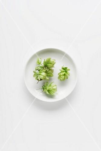Dried hops umbers