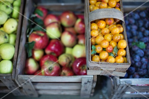 Apples, quinces, plums and other fruit at the exchange club 'foodXchange' in Markthalle IX, Berlin, Germany