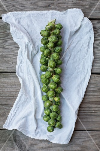 Brussels sprouts on a cloth
