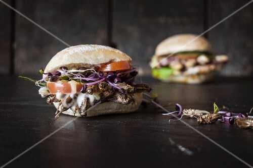 Insect burgers with grasshoppers and crickets