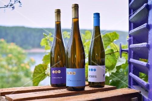 Bottles of wine from Lisa Bunn's Roter Hang vineyard, Rhine Hesse, Germany