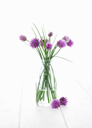 Vase of flowering chives