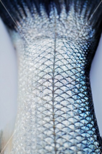 A fishtail (close-up)