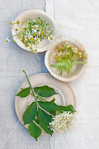 An arrangement of camomile flowers, lime flowers and elderflowers