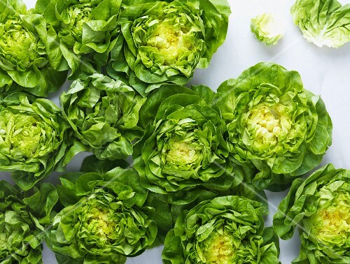 Lettuce seen from above