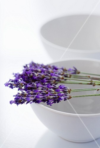 Lavender flowers laid across a white bowl
