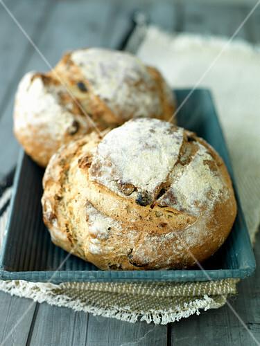 Fresh hazelnut rolls