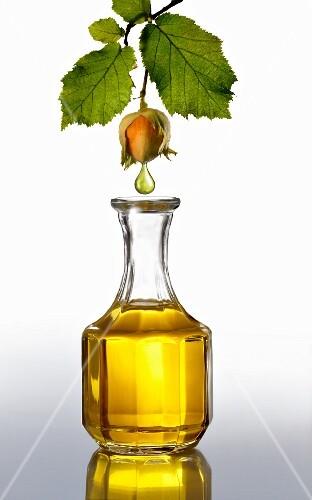 Hazel nut oil dropping from a hazel nut into a caraffe