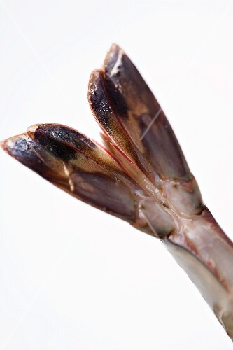 Tail of raw prawn (close-up)