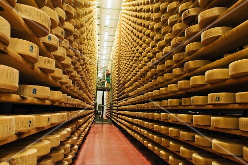 Asiago cheese in a ripening cellar (Pennar dairy in Asiago, Italy)