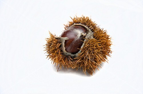 A sweet chestnut