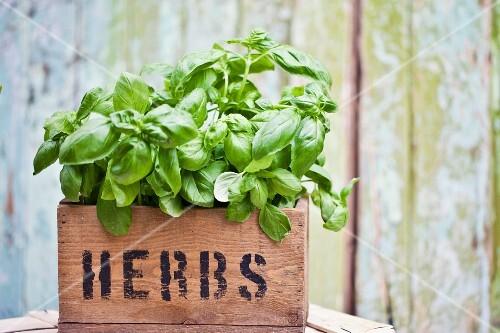 Basil in herb box