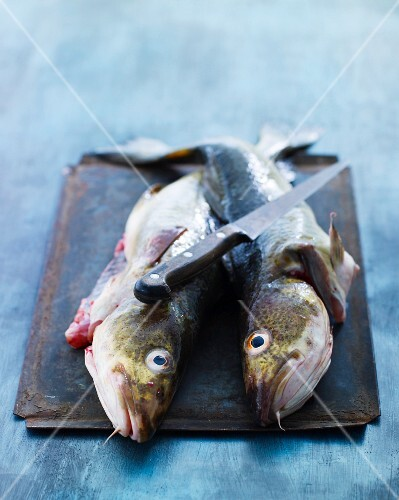 Two freshly caught cod fish